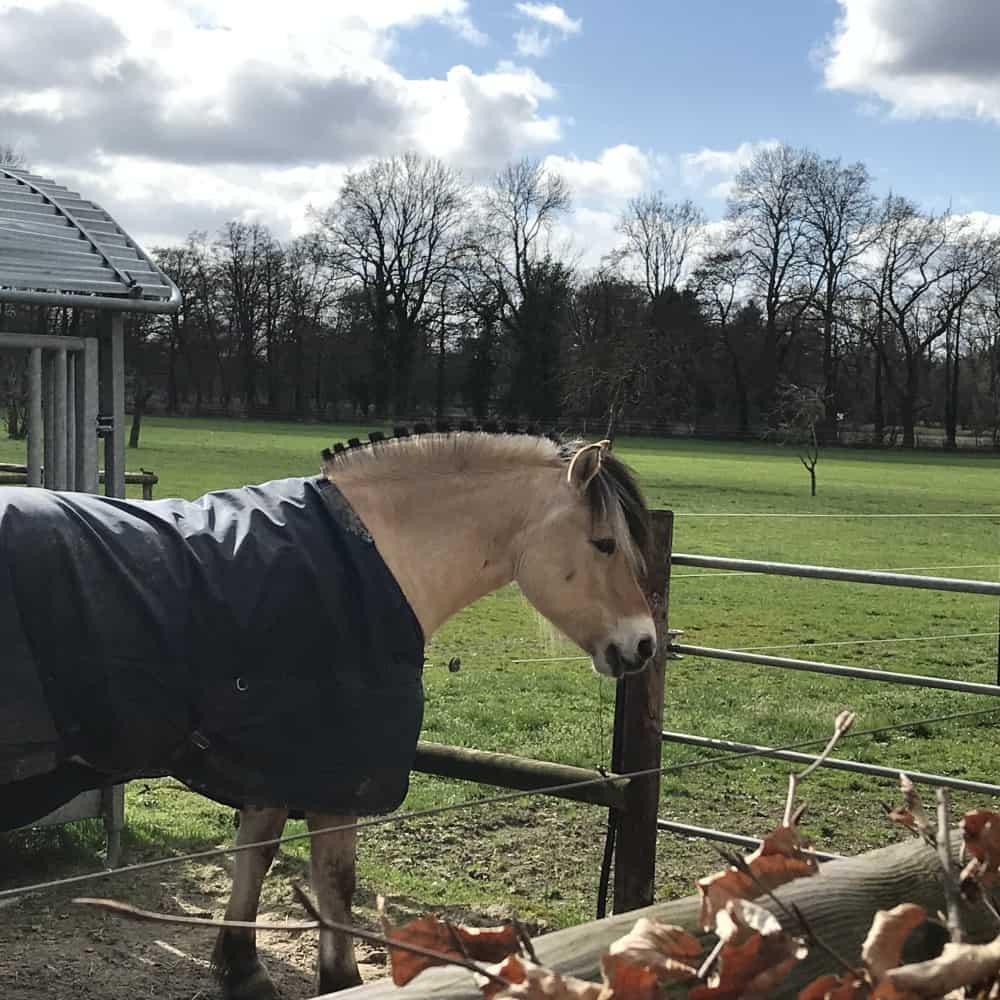 Unternehmensberatung Pferdebetriebe